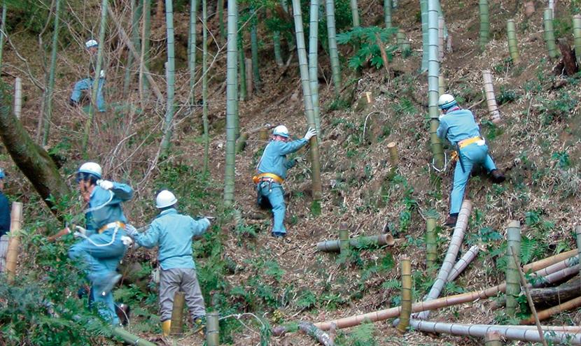竹林伐採ボランティア